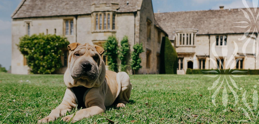 Dog-friendly-hotel-in-the-Cotswolds-be5a24c86000af9d9e29214ffa7c9864
