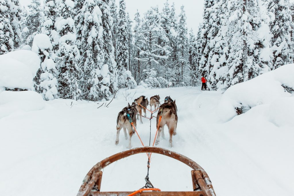 Dog sledding in arctic